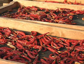 Ukuva iAfrica Chillies drying on a rack at the Fynbos Chilli farm
